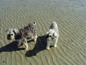 Truman and Dieter on the beach in Tofino in 2012.